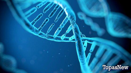 ДНК на НТВ сегодняшний выпуск 26 12 2018 смотреть онлайн