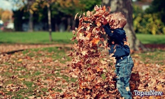 Ребёнок играет в листве - картинка